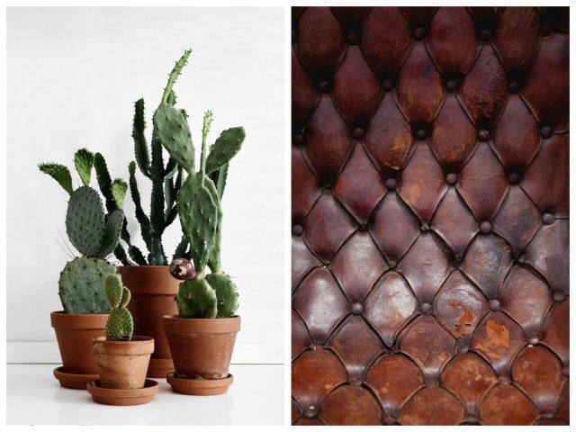 plants in terracotta pot